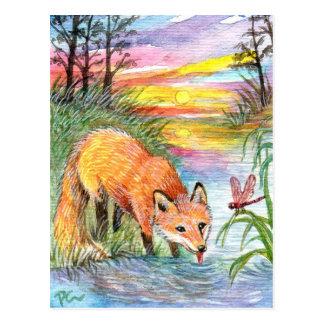 Fox Drinking by Riverside Postcard
