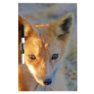 fox dry erase board