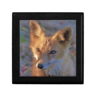 fox gift box