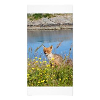 Fox in flower field in midnight sun Norway card