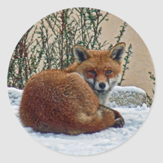 Fox in the snow classic round sticker