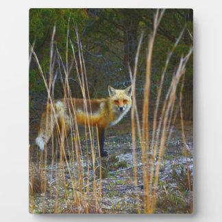 Fox in Woods Photo Plaque