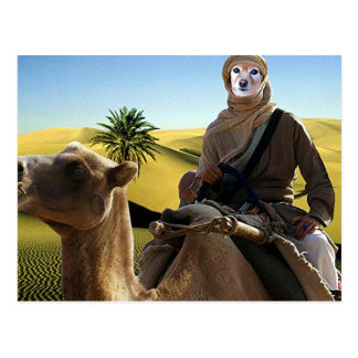 Fox Is Lawrence Of Arabia Postcard