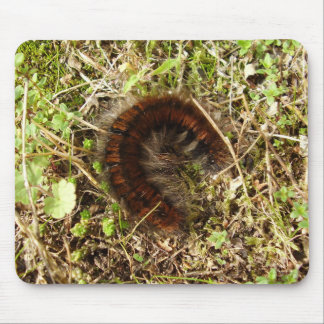 Fox Moth Caterpillar Mouse Mat