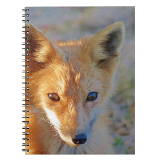 fox notebooks
