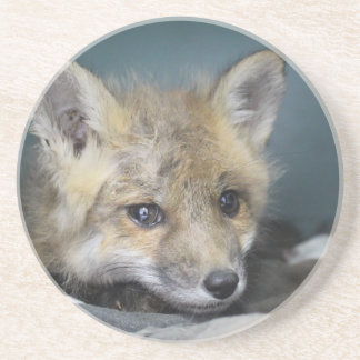 Fox Phone Case Coaster