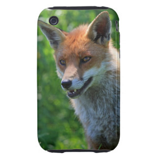 Fox red beautiful photo iphone 3G case mate tough