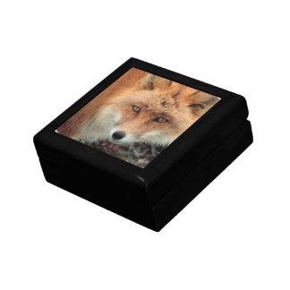 Fox Species Gift Box