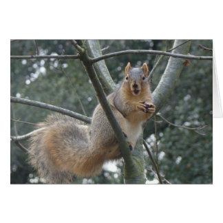 Fox Squirrel Card