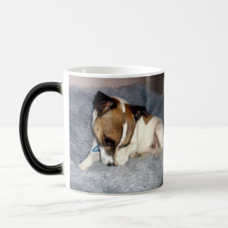 Fox Terrier, Oh So Shy, Magic Morph Coffee Mug. Magic Mug