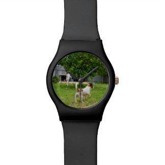 Fox Terrier Playtime, Ladies Black May Watch