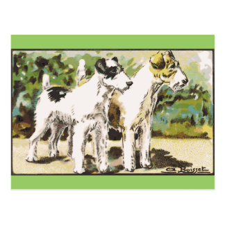 Fox Terrier Postcard