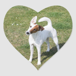 Fox Terrier Smooth dog beautiful photo stickers