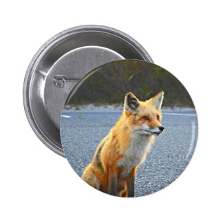 Fox Up Close 6 Cm Round Badge