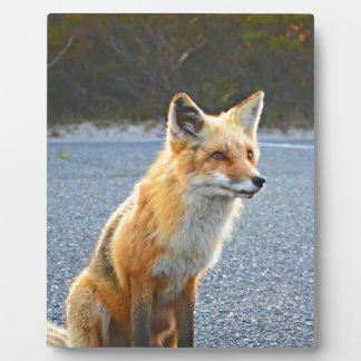 Fox Up Close Display Plaque