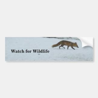 Fox-Watch for Wildlife Bumper Sticker