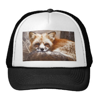 Foxes Hats