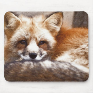 Foxes Mouse Pad