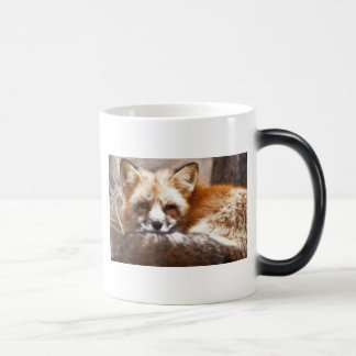 Foxes 11 Oz Magic Heat Color-Changing Coffee Mug
