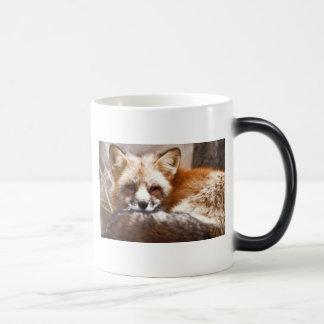 Foxes Morphing Mug