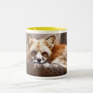 Foxes Coffee Mugs