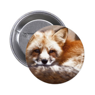 Foxes Pinback Buttons
