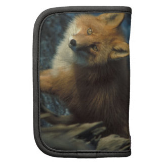 Foxes Folio Planners