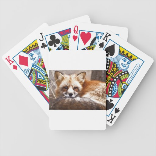 Foxes Bicycle Poker Cards