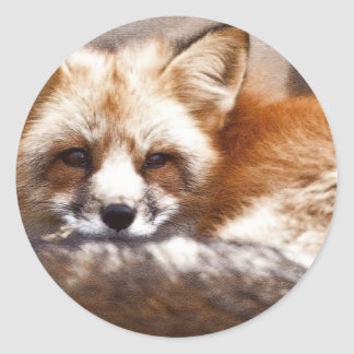 Foxes Round Stickers