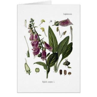 Foxglove Card