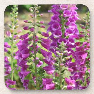 Foxglove Flowers Coasters
