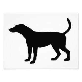 Foxhound Silhouette Art Photo