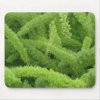 Foxtail Fern, Asparagus densiflorus myers Mouse Pad