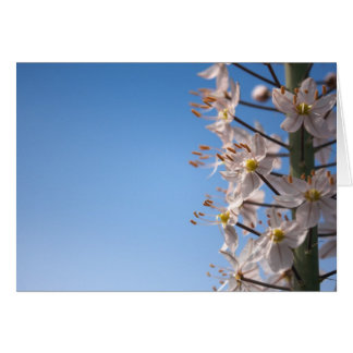 Foxtail Lily blank card