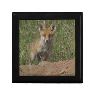 Foxy Gift Box