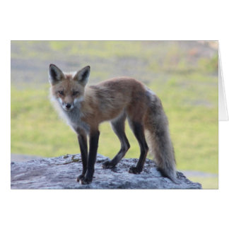 Foxy Momma Greeting Cards