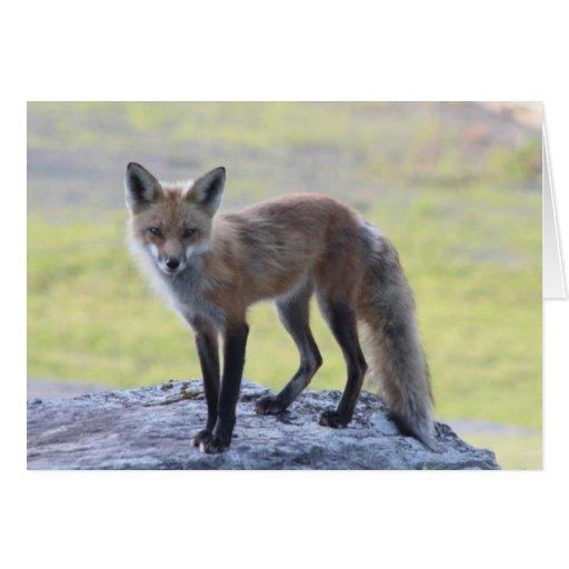 Foxy Momma Card