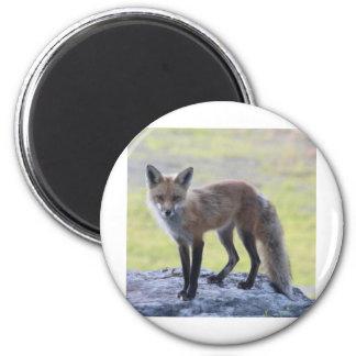 Foxy Momma Fridge Magnet