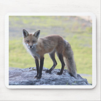 Foxy Momma Mouse Pad