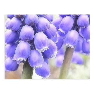 Fragrant Muscari Blooms Postcard
