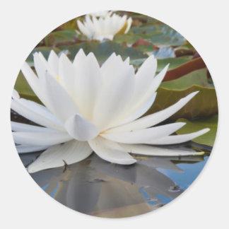 Fragrant Water Lily (Nymphaea Odorata) On Caddo Round Sticker