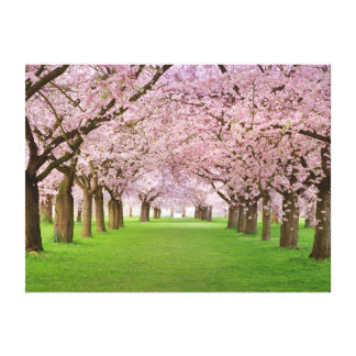 Framed Canvas art Print Cherry Blossom Gallery Wrapped Canvas