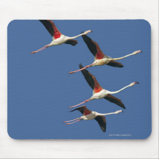 France, Bouches du Rhone, Camargue, Greater Mouse Pad