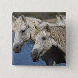 France, Camargue. Horses run through the 15 Cm Square Badge