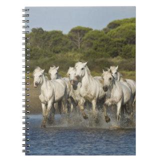 France, Camargue. Horses run through the estuary 3 Notebook