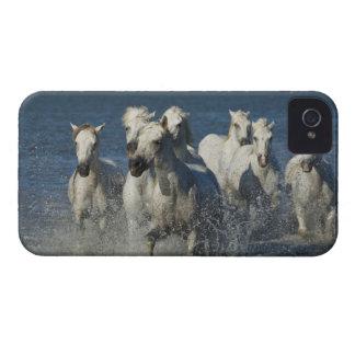 France, Camargue. Horses run through the estuary 4 iPhone 4 Case-Mate Cases