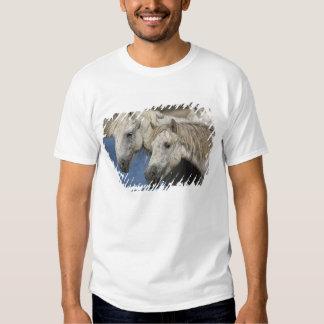 France, Camargue. Horses run through the T-shirts