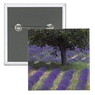 France, PACA, Alpes de Haute Provence, 15 Cm Square Badge