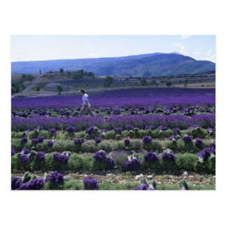 France, PACA, Alpes de Haute Provence, Manual Postcard