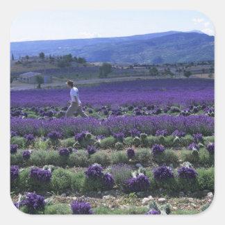 France, PACA, Alpes de Haute Provence, Manual Square Sticker